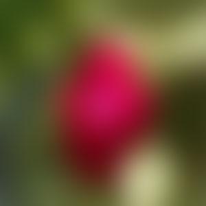 gradient-background